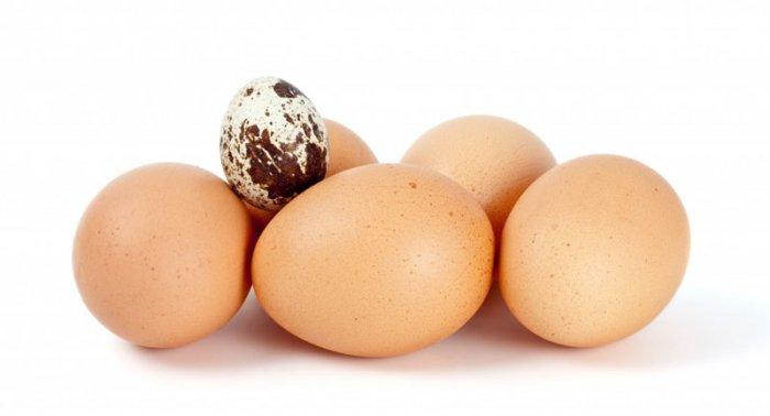 Отличие куриных яиц от перепелиных