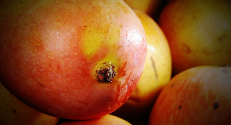 Сколько углеводов в манго